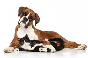 pet business insurance cover